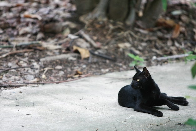 Black cat portrait on the street Premium Photo
