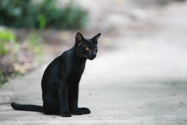 Black cat portrait on the street Premium Photo