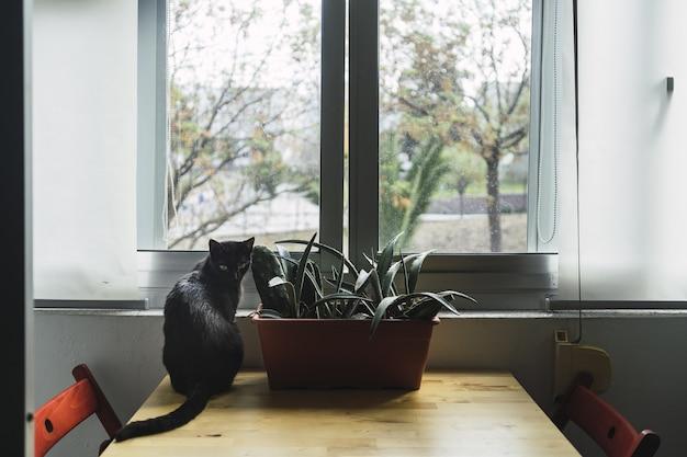 Gatto nero seduto accanto a una pianta della casa vicino alla finestra durante il giorno Foto Gratuite