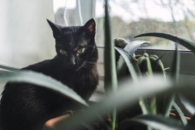 昼間の窓際の観葉植物の隣に座っている黒い猫 無料写真