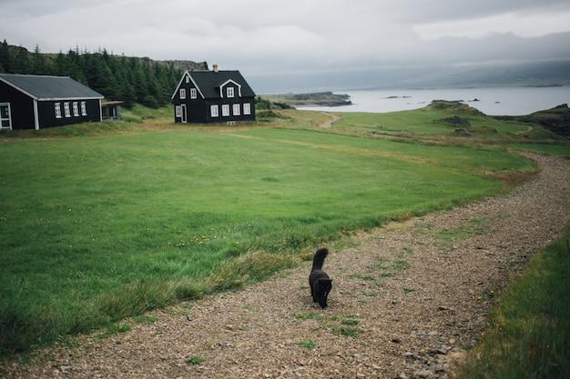 Черная кошка идет по тропинке или гравийной дороге рядом с зеленой лужайкой и настоящим исландским черным домом. Бесплатные Фотографии