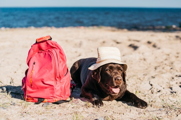 Black dog having fun at the beach Free Photo