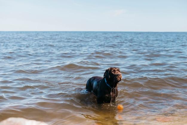 Black dog having fun at the beach Free Photo