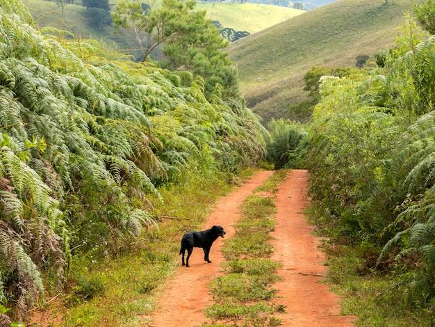 未舗装の田舎道で黒犬 Premium写真