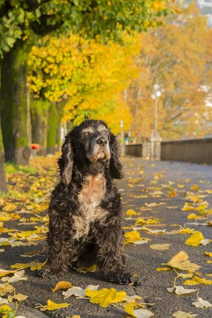 カラフルな秋の公園の黒い犬 無料写真