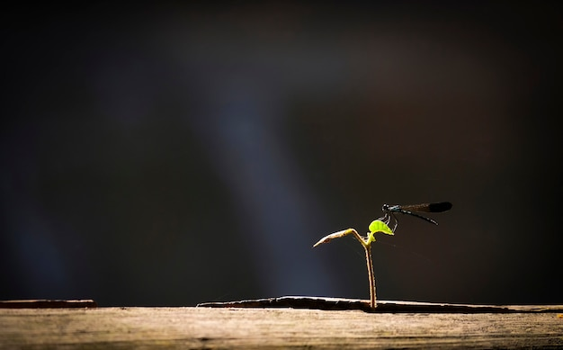 Black dragonfly on little plant growing on wood with sunlight and black background / Premium Photo