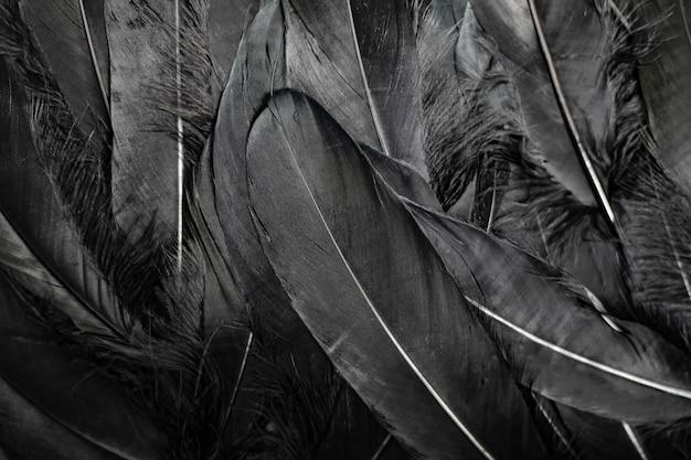 Black feathers background Premium Photo