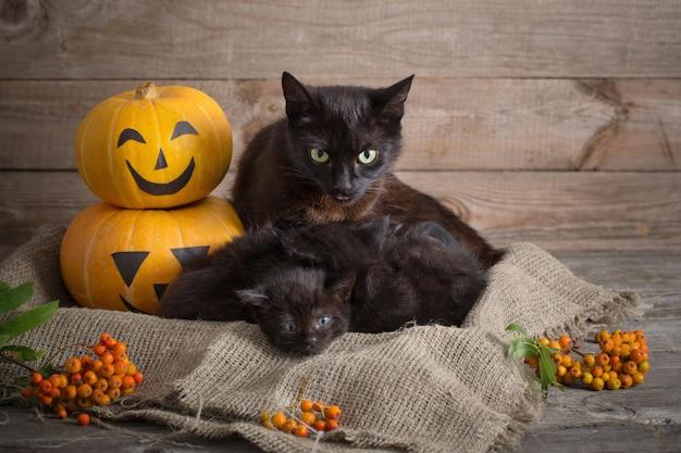 ハロウィーンのカボチャと黒い小さな猫 Premium写真