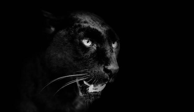 黒豹の肖像画。動物の世界 Premium写真