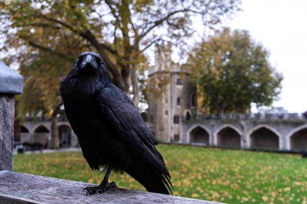 Corvo nero seduto su un pezzo di metallo dietro un edificio Foto Gratuite