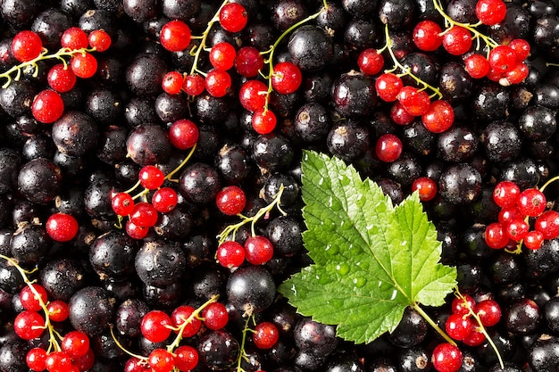 Black and red currant with a leaf against Premium Photo