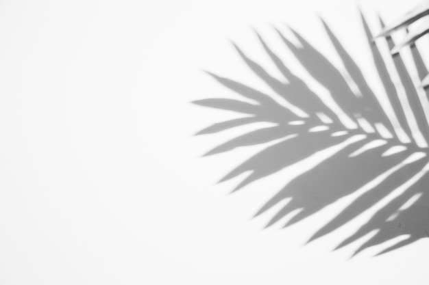 Black shadow leaf on white backdrop Premium Photo