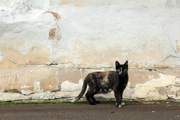 A black thin cat. old shabby wall on the street Premium Photo