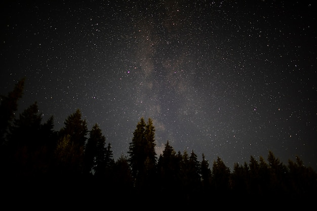 Black trees in an autumn starry night Free Photo