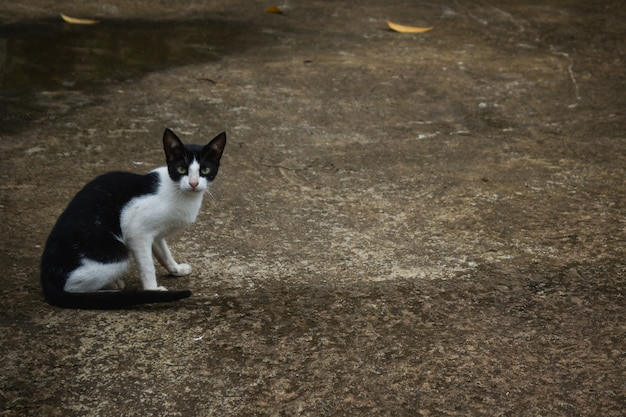 Black and white cat sitting on the road Free Photo