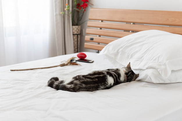 Black and white cat sleep on cozy white bed in modern bedroom interior Premium Photo