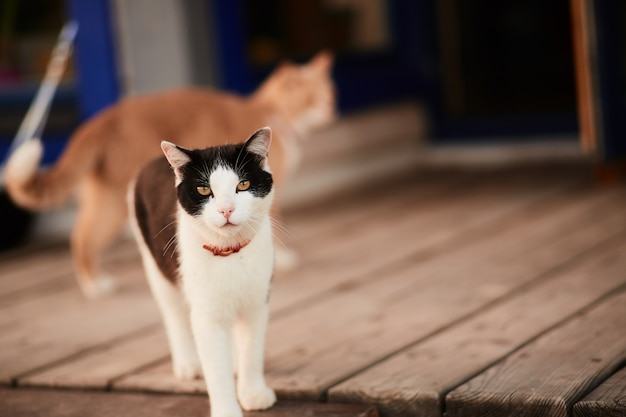 Black and white cat stands on the wooden porch of a country house Free Photo
