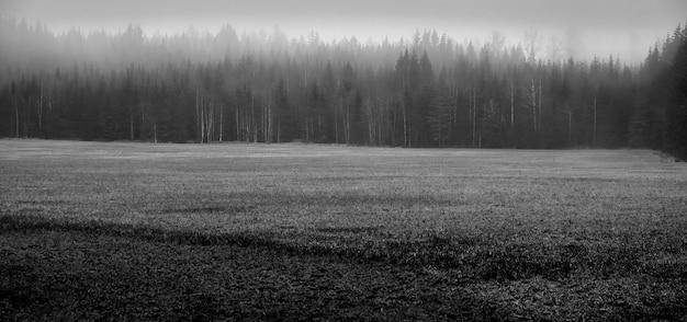 Colpo in bianco e nero di una foresta durante la nebbia Foto Gratuite