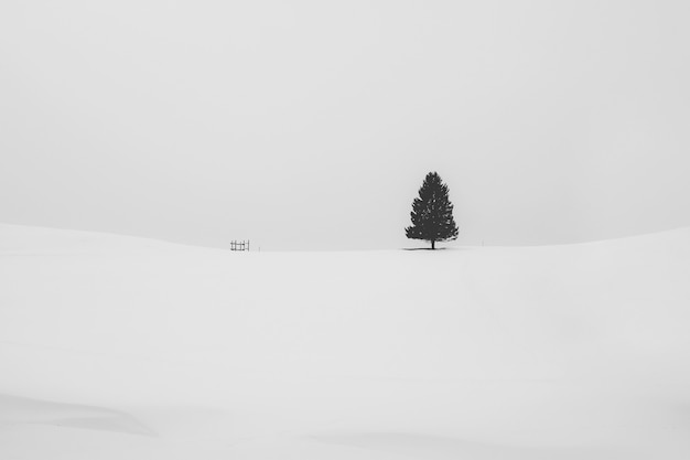 Black and white shot of an isolated pine tree covered with snow in a snowy area in winter Free Photo