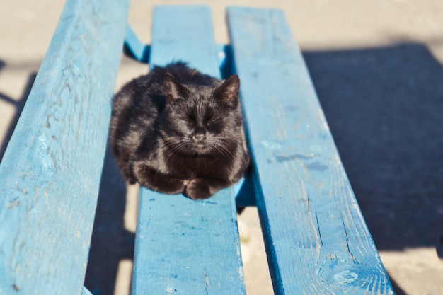 Black yard cat lying on a wooden bench on a sunny day Premium Photo