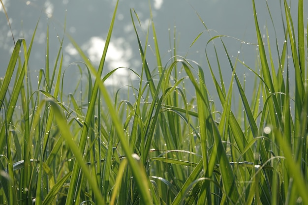 Blades of grass with sky background Free Photo