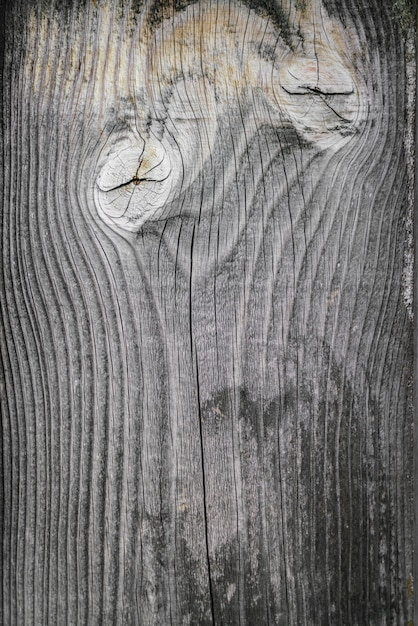 Blank grunge template wood brown Free Photo