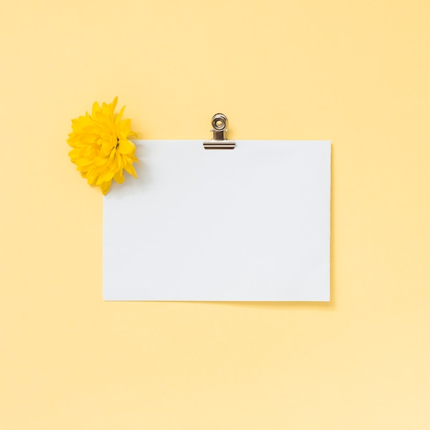 Blank paper sheet with yellow flower Free Photo