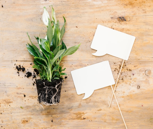 Blank speech bubbles and green potted plant above wooden desk Free Photo