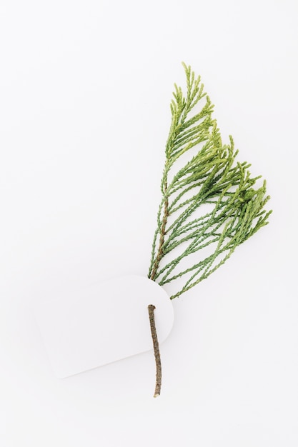 Blank tag with cedar twig isolated on white backdrop Free Photo