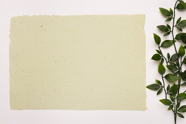 Blank textured paper near the plant leaves on white backdrop Free Photo