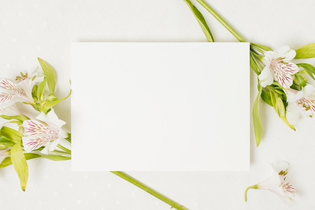 Blank wedding card over the alstromeria flower on white backdrop Free Photo
