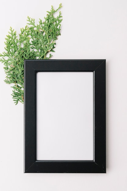 Blank wooden frame with cedar twig isolated on white background Free Photo