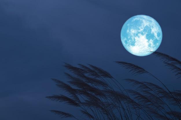 Blood strawberry moon on night  sky back silhouette grass flowers Premium Photo