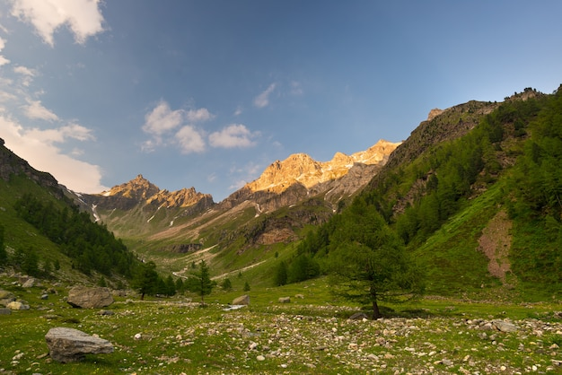 Blooming alpine meadow and lush green woodland high altitude mountain range at sunset Premium Photo