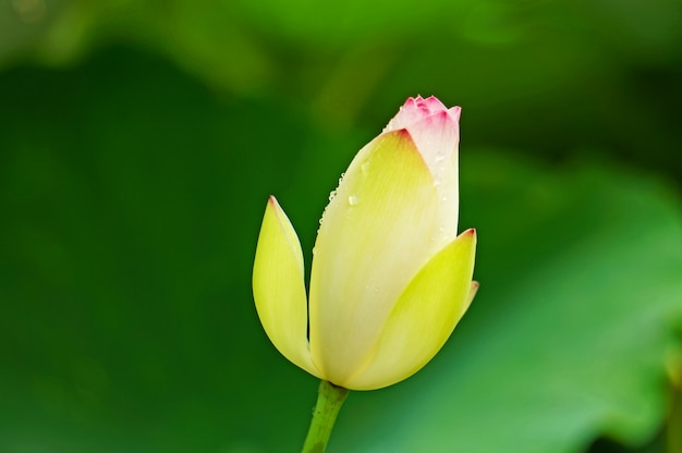 Image result for blooming flower