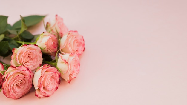 Blooming pink roses copy space Free Photo