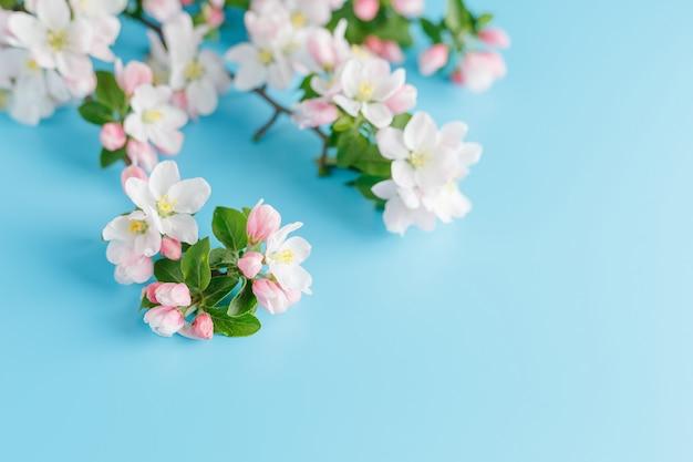 Blooming spring sakura on a blue Premium Photo