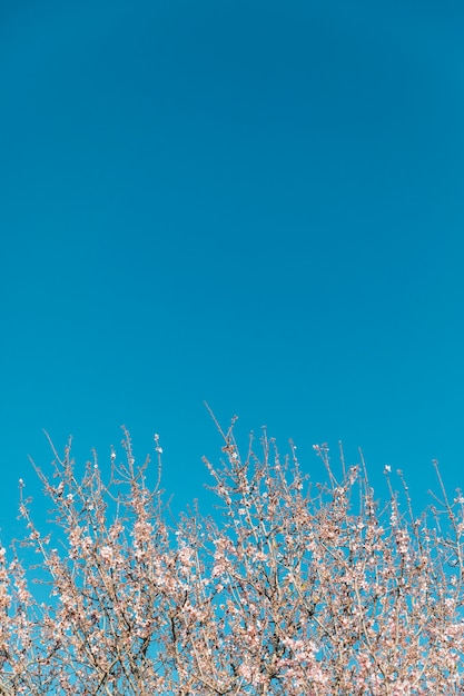 Blooming tree and clear sky with copy-space Free Photo