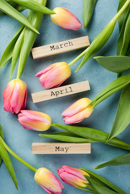 Blooming tulips with spring months tags Free Photo