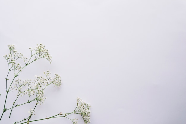 Blooming twigs arranged on blue Premium Photo