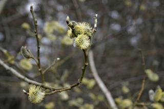 In fiore, giallo Foto Gratuite