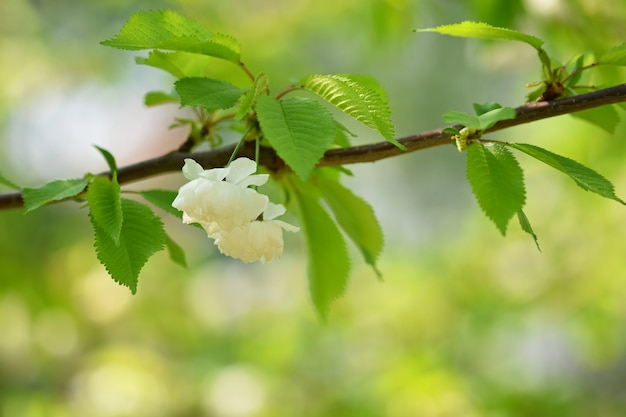 Blossom tree. nature background in sunny day. spring flowers. beautiful orchard and abstract blurred Free Photo