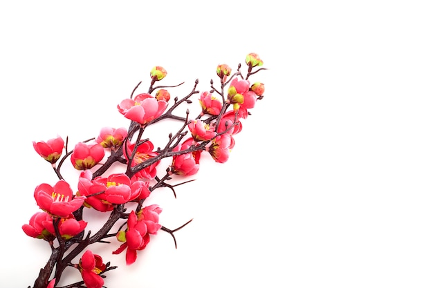 Blossoming cherry with bright pink Premium Photo