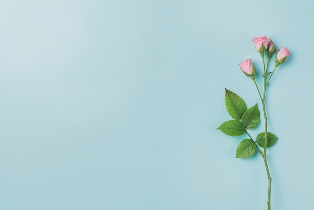 Blue Background With Pink Flowers And Blank Space For Messages Photo