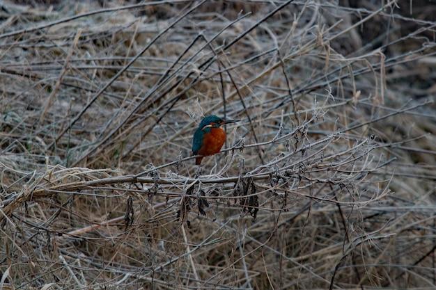 겨울에 나뭇 가지에 그친 블루 브라운 물총새 무료 사진