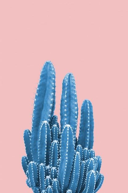 Blue cactus on pink background Premium Photo