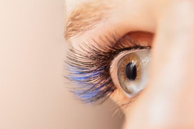 Blue color eyelash extensions. trendy false lash style close-up, woman eye macro Premium Photo
