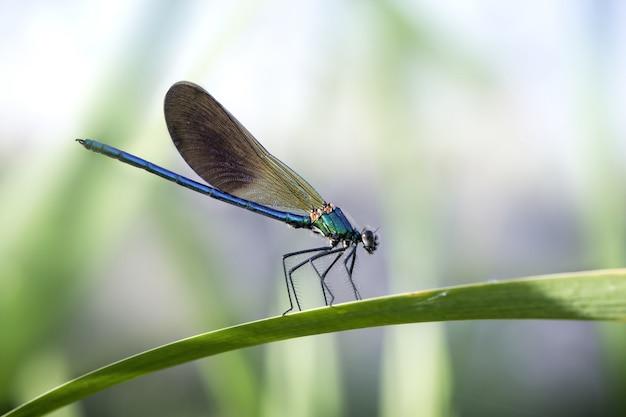 Damselflies blu su una foglia in un giardino alla luce del sole con uno sfondo sfocato Foto Gratuite