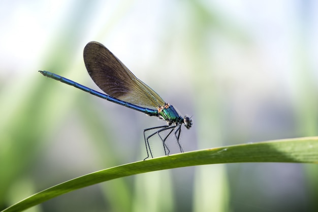 背景がぼやけて日光の下で庭の葉の青いイトトンボ 無料写真