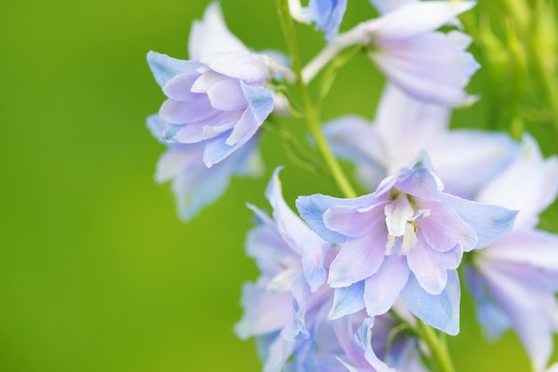 Blue flowers on green background Premium Photo